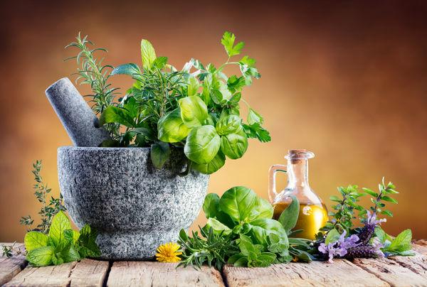 کشت گیاهان دارویی؛ یک ضرورت ملی در توسعه بخش کشاورزی
