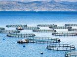 ۲ سایت پشتیبان تولید بچه ماهیان بومی برای پرورش ماهی در قفس در شمال و جنوب کشور ایجاد میشود