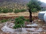 خسارت ۹۳میلیاردی تگرگ به باغهای نیریز