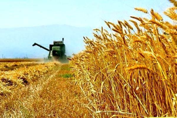 آغازِ خرید تضمینی گندم در استان اصفهان