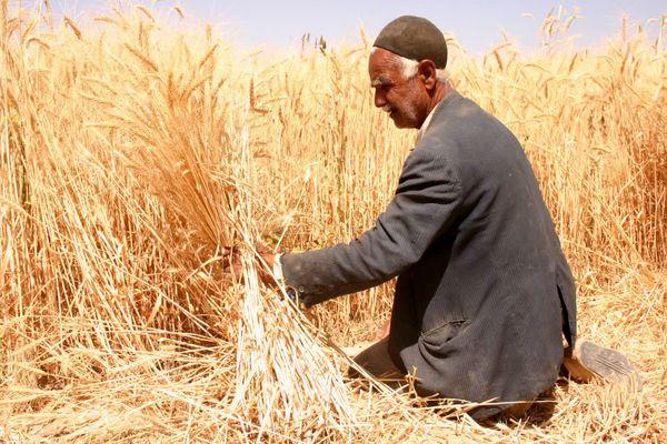 ۷۲.۶ درصد طرحهای اشتغال بخش کشاورزی اجرا شد