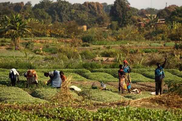 روش تولید و مصرف غذا باید تغییر کند