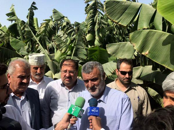 توسعه کشاورزی اقتصادی روز ضامن رونق تولید و اشتغال