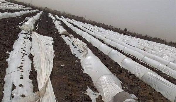 طوفان و تندباد ۲۳۵میلیارد تومان به بخش کشاورزی اصفهان خسارت وارد کرد
