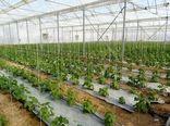 افزایش سهم تسهیلات بانکی طرحهای گلخانهای
