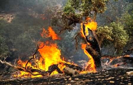 کاهش ۵۰ درصدی آتشسوزی منابع طبیعی در سال 97