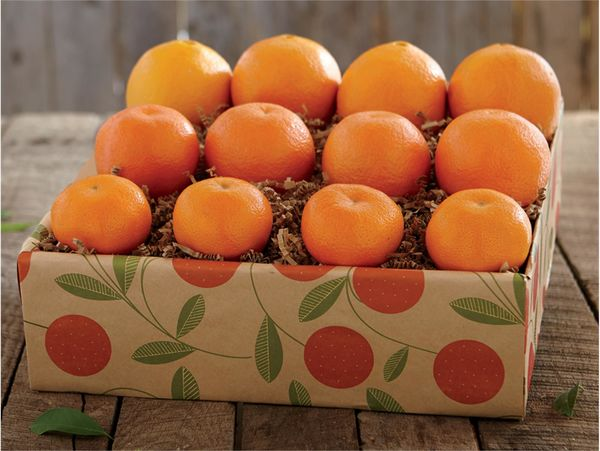 صادرات ۲۰ هزار تن نارنگی با ارزآوری 140 میلیاردی