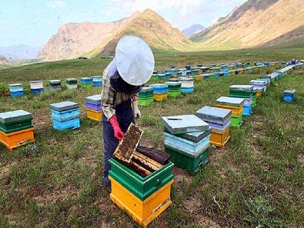تولید ۵۹۰۰تن تن عسل در استان گیلان