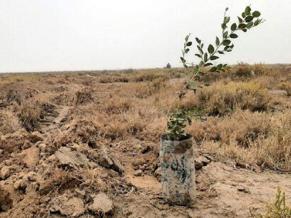 نهالکاری در 100 هکتار از اراضی شهرستان لردگان و خانمیرزا