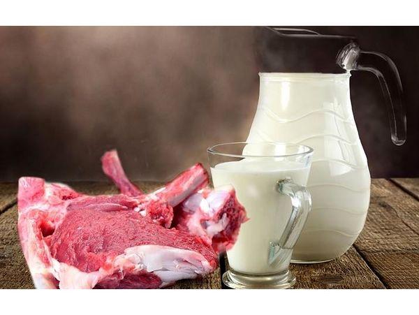 تولید56 هزار تن شیر و گوشت قرمز در ساری