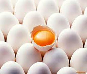 تولید 20 هزار تن تخم مرغ در مرغداریهای استان قزوین