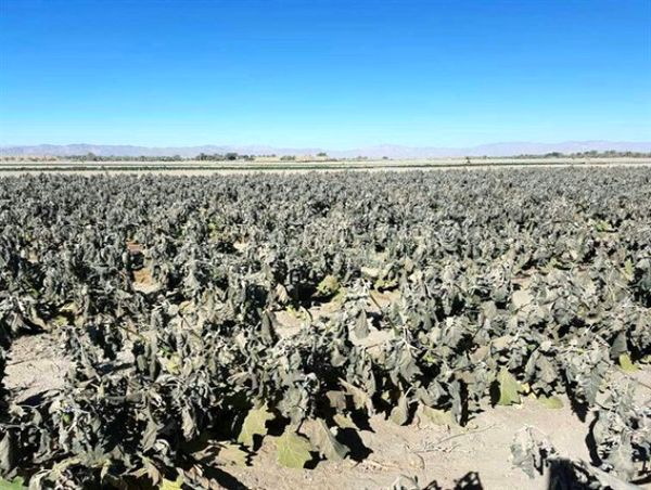سیل و سرمای بهاره در سال جاری  735 میلیارد ریال به بخش کشاورزی فاروج خسارت زد