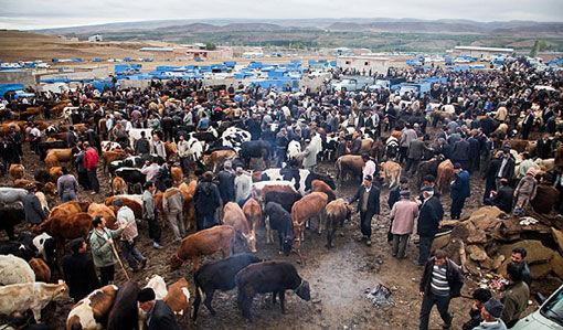 میدان دام اهر تنها میدان فعال روزانه استان آذربایجان شرقی
