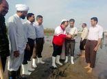 هرمزگانی ها برای سرسبزی کرانه های خلیج فارس  115 هزار اصله نهال کاشتند