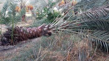 خسارت سنگین به بخش کشاورزی قیروکارزین وارد شد