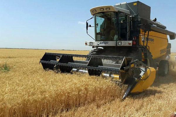 برداشت ۱۰ هزار تن گندم از اراضی کشاورزی فریدونشهر