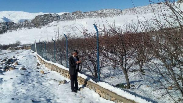 سرمازدگی ۶۰۰ هکتار از باغات شهرستان فارسان