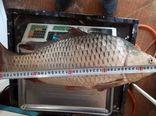 پایان صید آزمایشی ماهی از سدهای فارس
