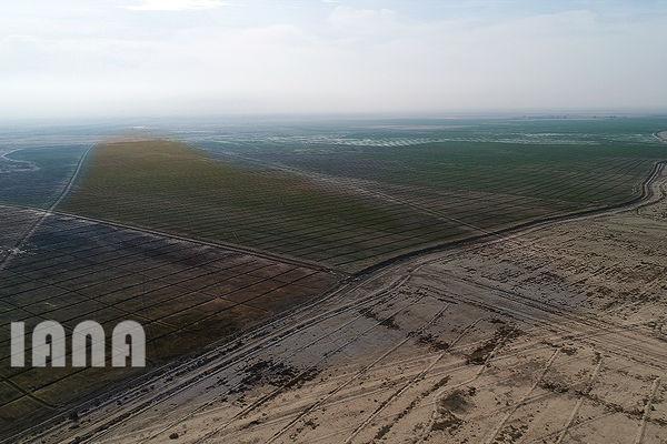 عملیات بیابانزدایی در 6 هزار هکتار اراضی استان سمنان انجام شد