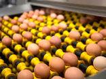 تعیین عوارض صادراتی تخم مرغ؛ ٤٠٠ تومان در هر کیلوگرم