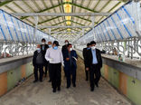 بهره برداری ازچندین مگاپروژه درزیربخشهای مختلف بخش کشاورزی آذربایجان شرقی تا پایان سال