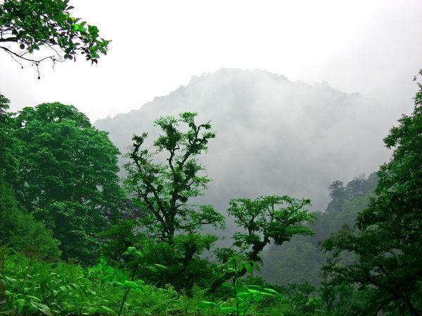 حفظ جنگلهای هیرکانی ایران از راه ثبت جهانی