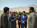 باغات مدرن تنگ کنشت از نمادهای اقتصاد مقاومتی در استان کرمانشاه