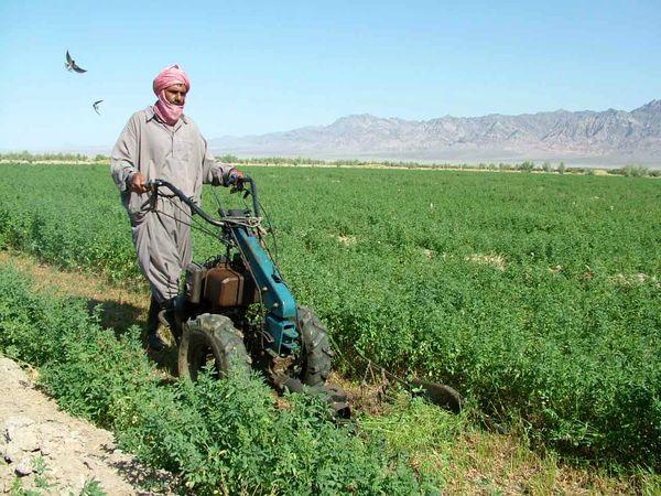 یک میلیون و 700 هزارتن علوفه در سیستان و بلوچستان تولید شد