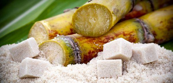 افزایش تولید 424 هزار تنی شکر خام از نیشکر/ تولید سالانه بیش از 750 هزار تن شکر در خوزستان