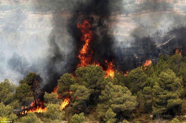 سهلانگاری برخی جنگل را به آتش کشید