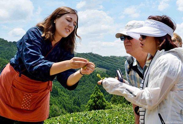 متخصصان چای ژاپنی به افراد غیرژاپنی، آموزش میدهند