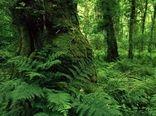 حفاظت از 2میلیون و 700هزار هکتار جنگل هیرکانی