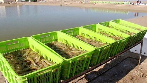 گلخانه و پرورش شتر و شترمرغ از اولویتهای سرمایهگذاری در بخش کشاورزی بوشهر