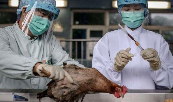 سایه شوم آنفلوآنزای نوع H7N9 روی انسانها
