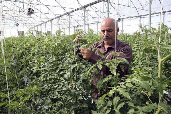گیلان استان پیشرو در تولیدات گلخانه ای کشور