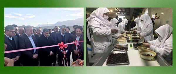 افتتاح کارخانه بسته بندی و فرآوری خرما در سیستان وبلوچستان