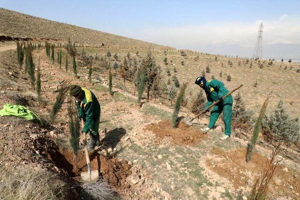 ۴۰۰ هزار اصله نهال در خراسان شمالی کاشته شد
