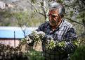 220 هزار میلیارد ریال خسارت تغییرات اقلیمی به کشاورزی