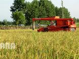 تورم تولید زراعت، باغداری و دامداری سنتی 4.8 درصد افزایش یافت