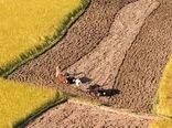 احیای زمینهای زراعی به نفع طبیعت