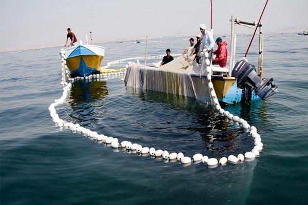 ممنوعیت صید ماهی حلوا سفید در خوزستان