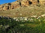 طرح کاداستر در ۷۰ درصد اراضی ملی ایلام اجرا شده است
