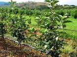 بیش از  67000 هکتار از اراضی استان مرکزی به انواع سامانههای نوین آبیاری تجهیز شده است