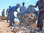 خطر جدی 80درصد صید ماهی در دنیا تهدید میکند