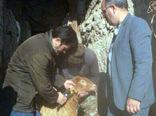پلاککوبی بیش از 3000 راس دام سنگین و سبک در شهرستان کلیبر