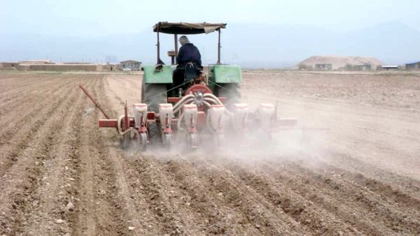 450 هکتار از مزارع کشاورزی شهرستان آبیک به زیر کشت چغندرمی رود
