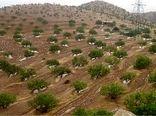 تصرف زمین به بهانه کشت محصول در اراضی شیبدار