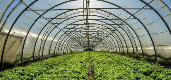 شهرکهای نوپای کشاورزی