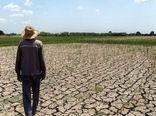 کشاورزان نطنز در محاصره خشکسالی/بیمه کشاورزی پاسخگوی زیان ها نیست