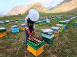 تمام زنبورداران موظف به دریافت مجوز اسکان هستند